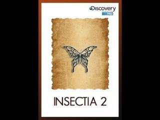 Страсти по насекомым 2. (6 серия из 13) / Insectia 2 / 2000