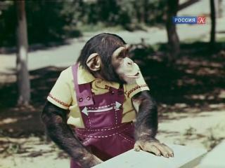 Новые приключения Дони и Микки. (1973).