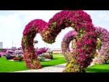 Самая Красивая Цветочный Парк В Мира Дубай