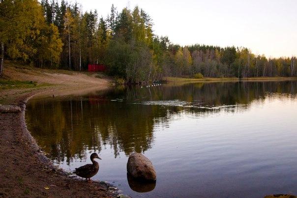 """Зимняя и летняя рыбалка на озере базы отдыха """"Заветное"""" в Ленинградской области - это  увлекательное времяпрепровождение."""