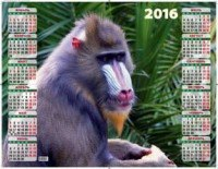 Год обезьяны. вожак стаи. календарь настенный листовой на 2016 год