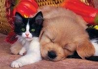 """Пазлы """"в мире животных. котенок и щенок"""", 500 элементов, Канц-Эксмо (Listoff, Unnika Land)"""
