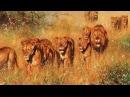 Очень интересный документальный фильм - Дикая Пустыня Африки. Животный мир Афри ...