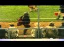 Monty Python The Philosopher Football
