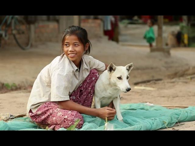 Камбоджийская местная собака. Планета собак 🌏 Моя Планета