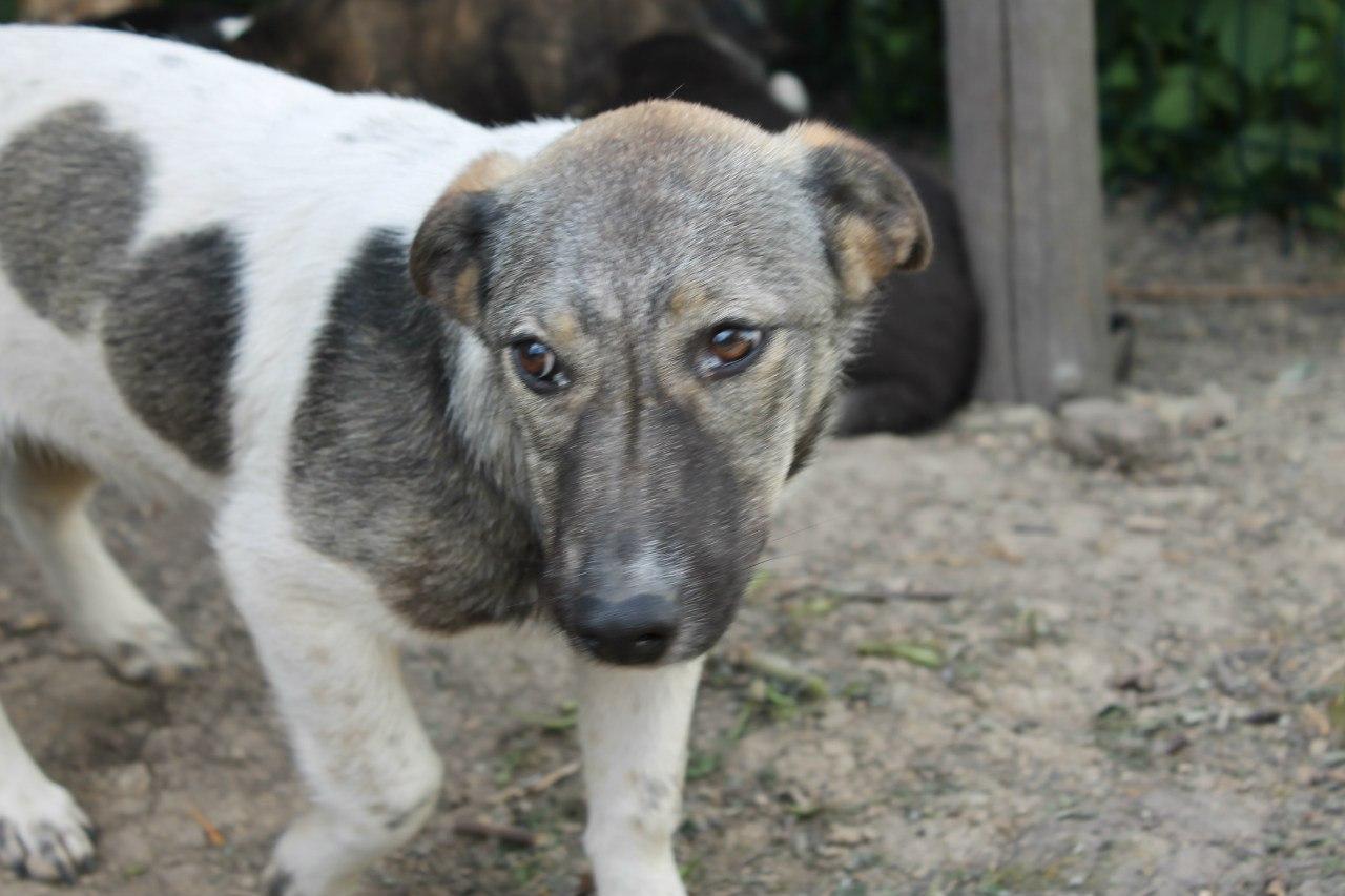Гусевская Городская прокуратура разъяснила как бороться с бездомными животными