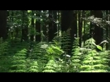 Демидыч Берегите природу (2)