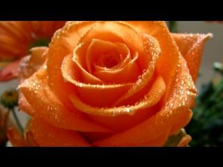«РОЗЫ...» под музыку Пугачева Алла - Миллионы алых роз(кто влюблен и в серьез-свою жизнь для тебя превратит в цветы..). Picrolla