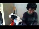 Viva la gloria от поющей собаки Билли Джо Армстронга