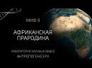 Африканская прародина Мифы об эволюции человека
