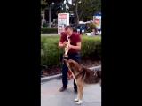 Бездомный пёс аккомпанирует музыканту. Это было очень необычно и неожиданно.. Набережная г. Ялта