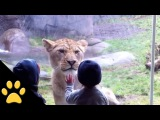 Kids At The Zoo Compilation
