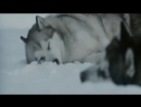 Nightwish Белый плен