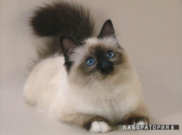 Кошка постарается удержаться на ваших коленях, даже когда вы встаете с