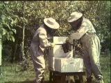 Содержание пчёл в многокорпусных ульях (1964)