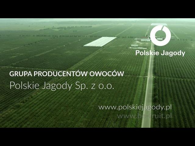 Polskie Jagody