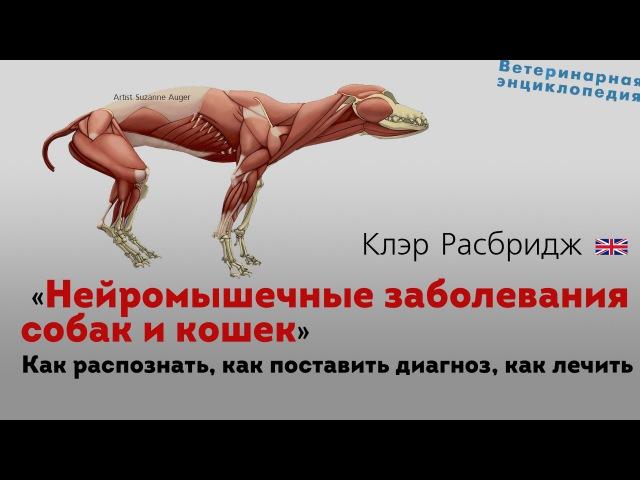 Нейромышечные заболевания собак и кошек. Neuromuscular disease