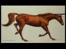 Акварель как нарисовать лошадь детальная прорисовка