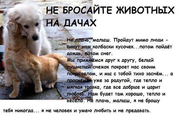 Не бросайте животных на дачах...