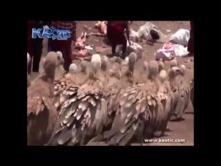 Небесное погребение. Тибет +18 ВНИМАНИЕ: Видео не рекомендуется людям со слабой психикой!