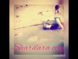 Шардара