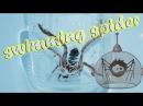 Что будет если паук птицеед окажется в воде Перемещение пауков по воде Swimming spider