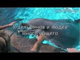 Дельфины - люди моря!
