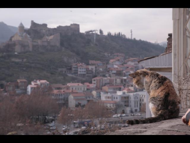 Поехали с Алевтиной Мадьяровой - Новый год в Тбилиси, часть 1 (2015)