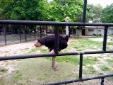 Страус. Николаев. Лучший зоопарк Украины
