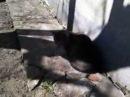 кошки мышки Часть 2 cat eats mice  part 2