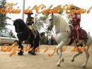 Feria del Caballo Espanol PRE 2010 Horse Show Expo Center