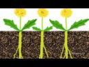 Шокирующая, правда, о сорняках в земледелии