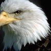 Типичный Орел