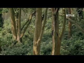 «Вирунга» (2014): Трейлер