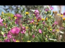 3 hrs relaxing nature sounds for studying, sleep, meditation - Birds singing -Awesome spring flowers