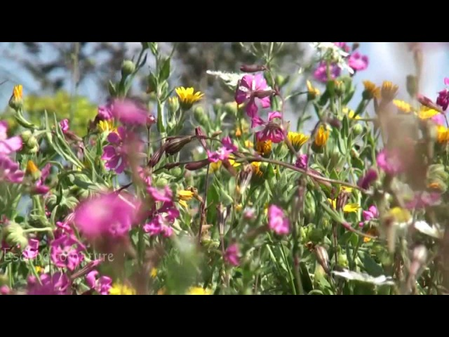 3 hrs relaxing nature sounds for studying sleep meditation - Birds singing -Awesome spring flowers