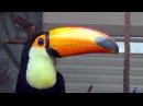 Ленинградский зоопарк. Птицы. Тропический рай (2016)