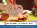 Как избавиться от плодовых мушек?