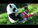 Краснную шапочку выебала панда в лесу порно wtfpass panda fuck ролевые игры секс красивое на природе жесткое dildo sex toy анал