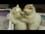котики делают массаж )) учитесь как уважать свою девушку от котиков )))