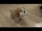 Интерактивный щенок с пультом-косточкой, 12 функций