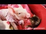 Dos bebés dándonos una lección de amor ♥