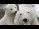 The Polar Bear Song (Soviet Songs in English)