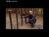 Корреспондент радужный - Носорог