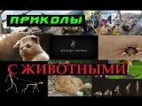 Приколы с животными #14 смешное видео 2015