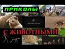 Приколы с животными 14 смешное видео 2015