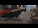 Смешные кошачьи испуги