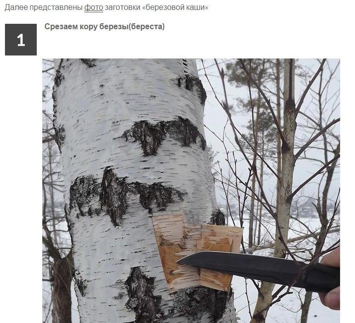 Каша из дерева.