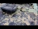 Медведь разорвал машину отомстил хозяину за дробь в заднице ХМАО Пыть Ях ДНС Май...