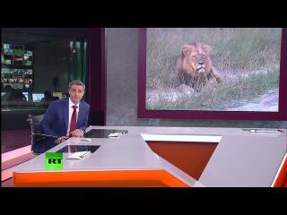 Убийца льва Сесила назван самым ненавистным человеком в США